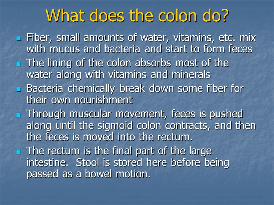 What does the colon do Fiber, small amounts of water, vitamins, etc. mix with mucus and bacteria and start to form feces.