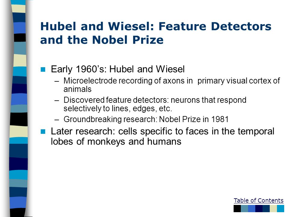 Hubel and Wiesel: Feature Detectors and the Nobel Prize
