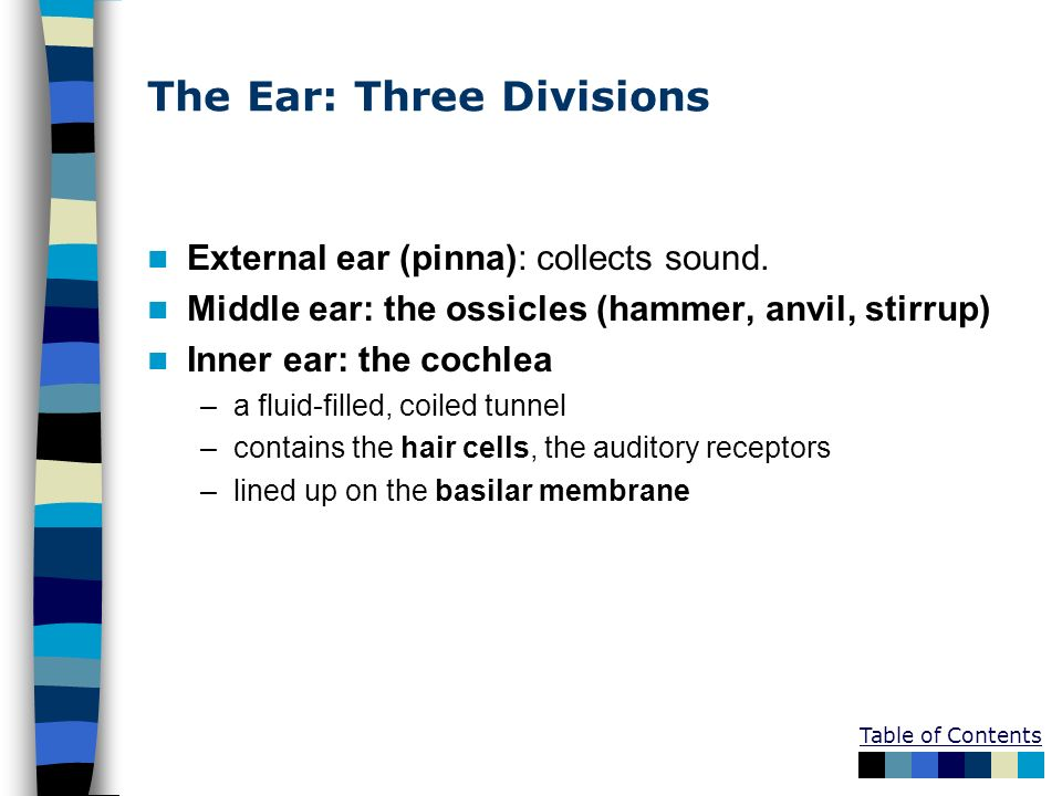 The Ear: Three Divisions