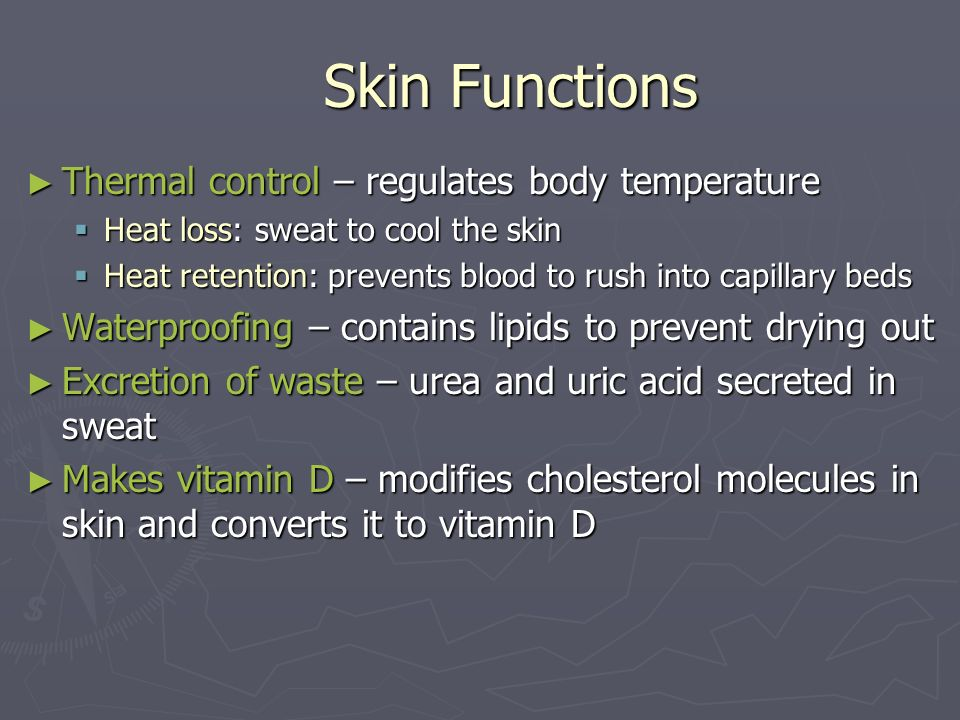 Skin Functions Thermal control – regulates body temperature