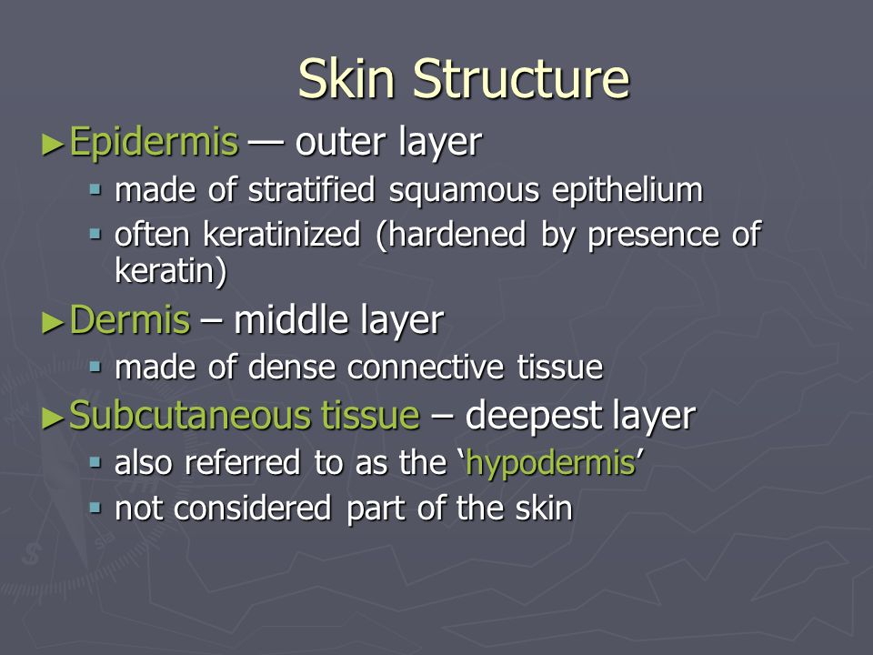 Skin Structure Epidermis — outer layer Dermis – middle layer