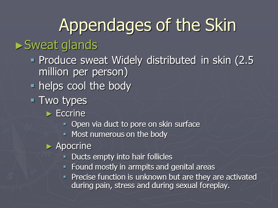 Appendages of the Skin Sweat glands