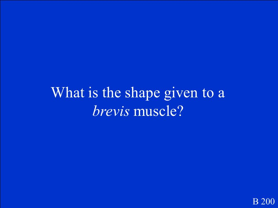 What is the shape given to a brevis muscle