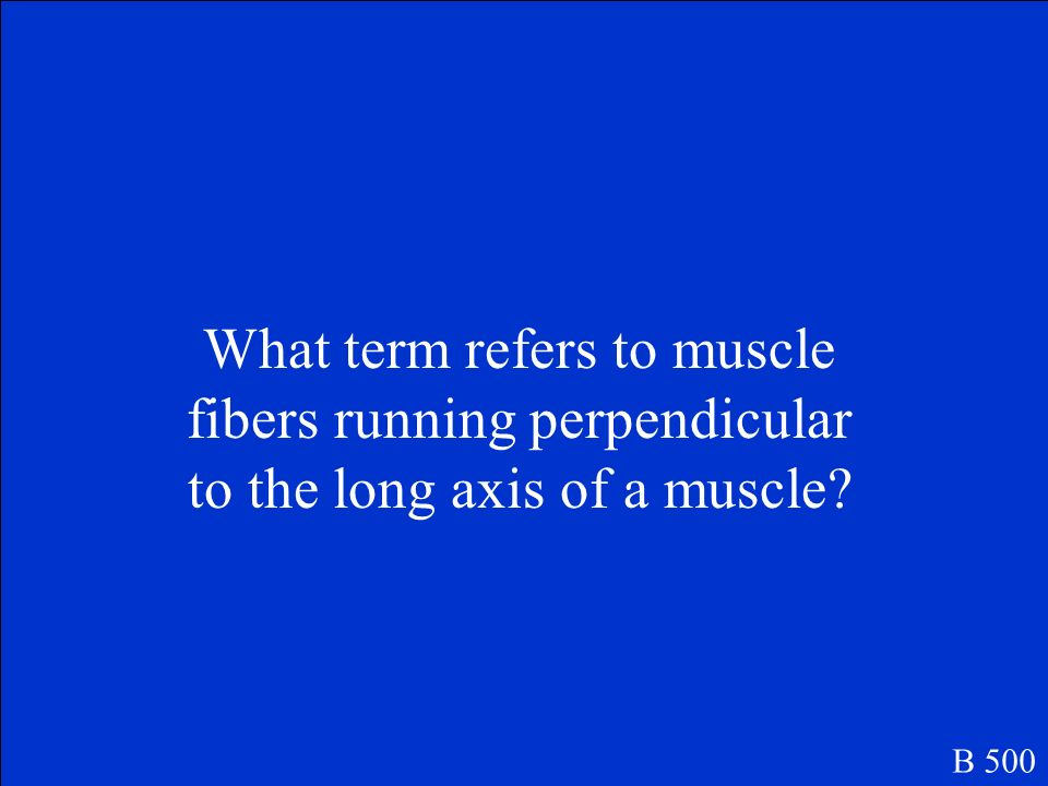 What term refers to muscle fibers running perpendicular to the long axis of a muscle