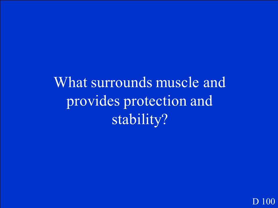What surrounds muscle and provides protection and stability