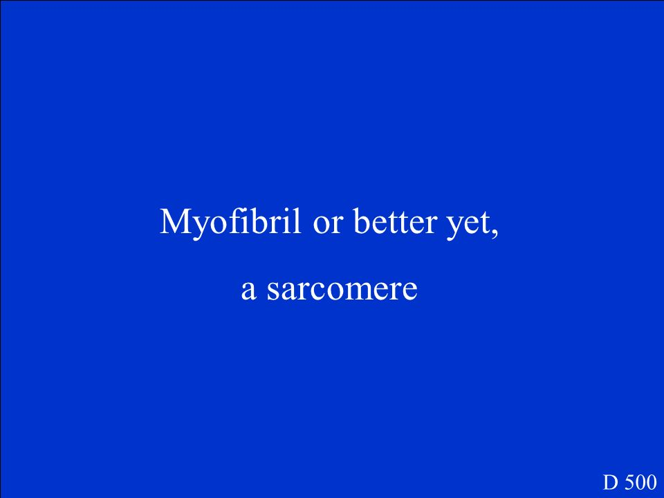 Myofibril or better yet,