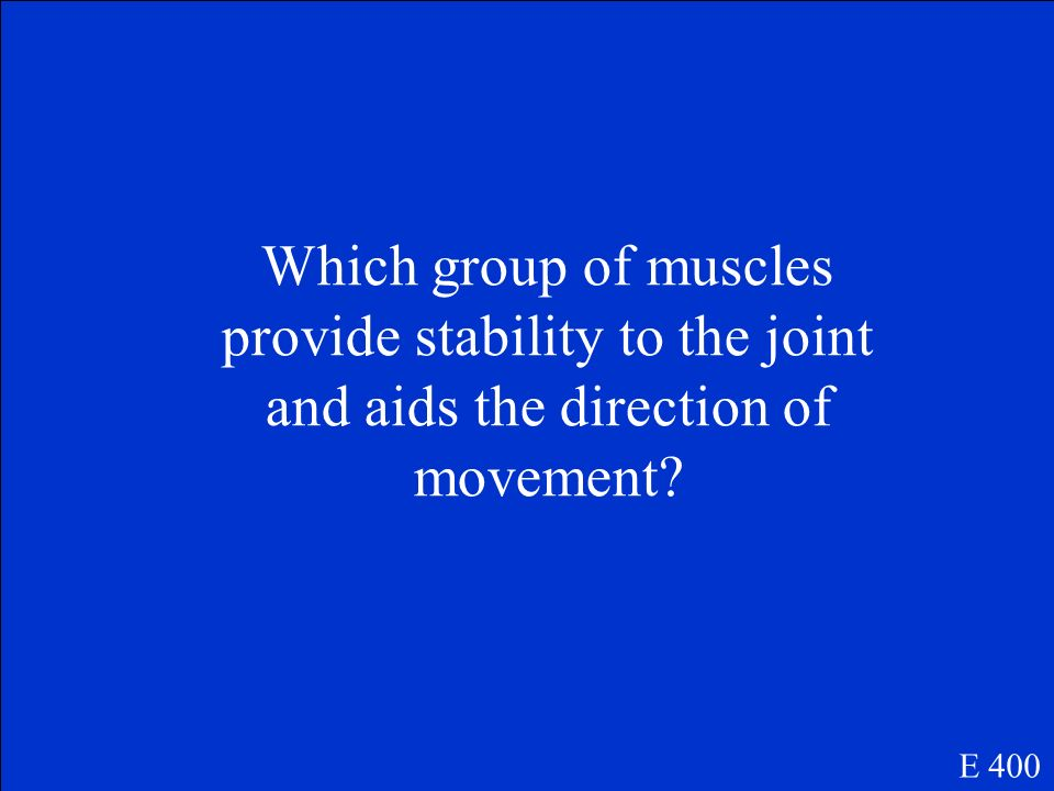 Which group of muscles provide stability to the joint and aids the direction of movement
