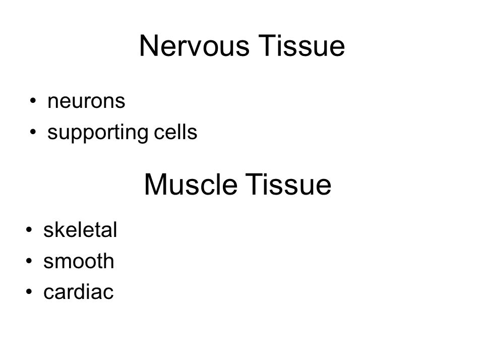 Nervous Tissue Muscle Tissue neurons supporting cells skeletal smooth