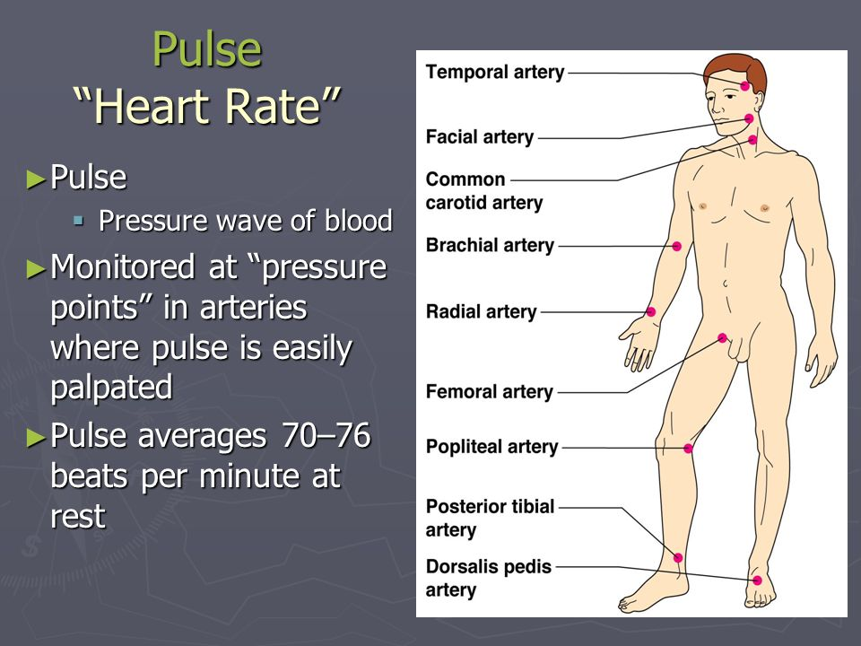 Pulse Heart Rate Pulse