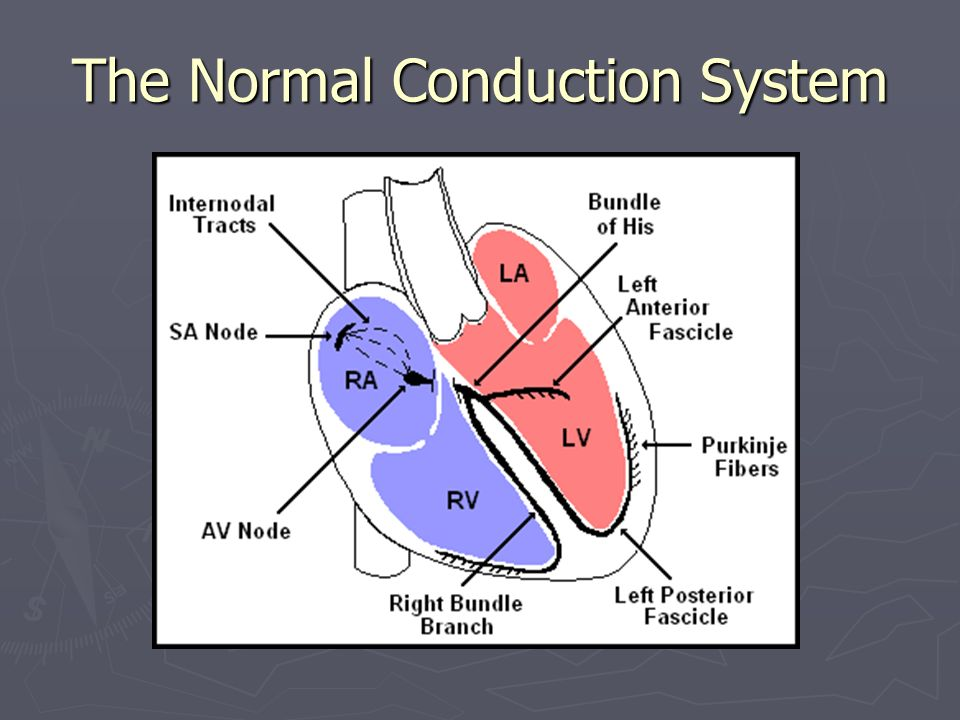 Heart box conduction diagram all kind of wiring diagrams cardiac cycle the two atria contract at the same time then they rh slideplayer com cardiac ccuart Choice Image