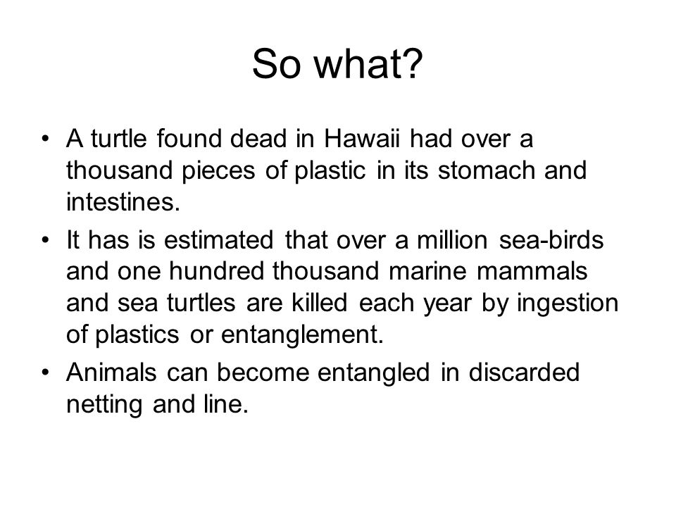 So what A turtle found dead in Hawaii had over a thousand pieces of plastic in its stomach and intestines.