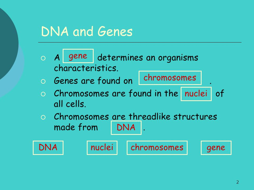 DNA and Genes A determines an organisms characteristics.