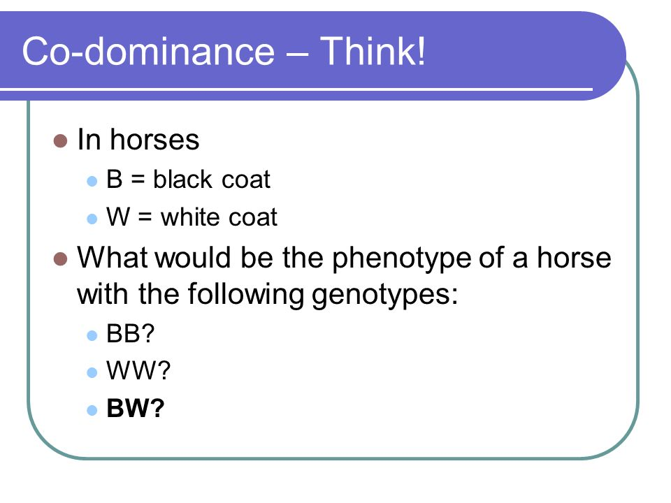 Co-dominance – Think! In horses