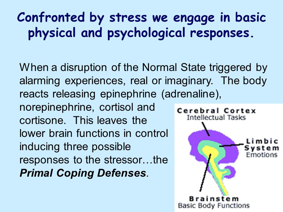 Confronted by stress we engage in basic physical and psychological responses.
