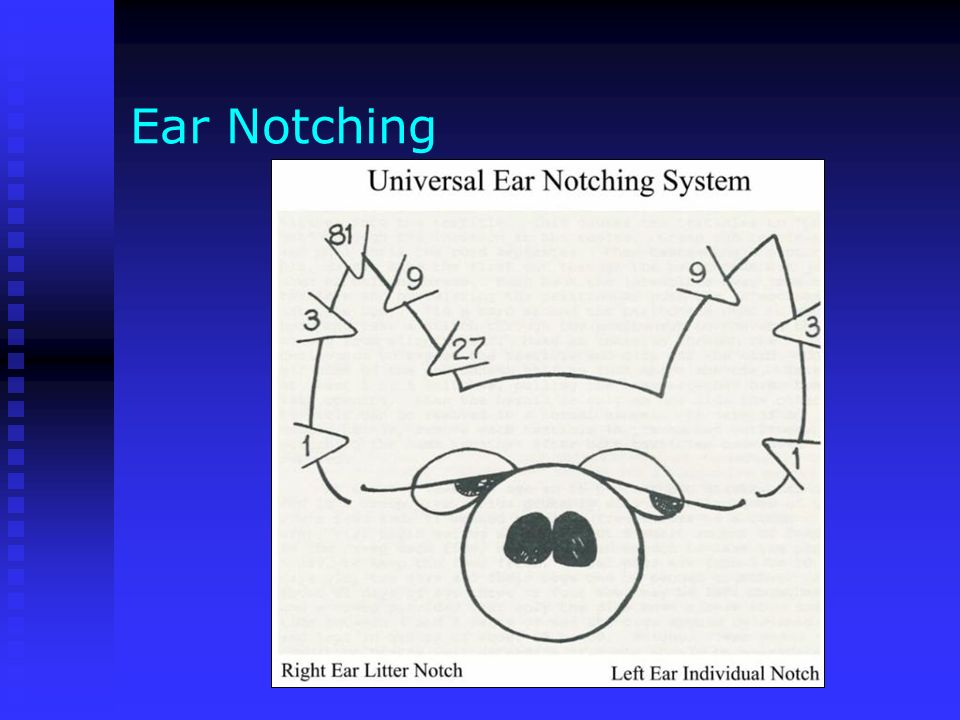 Agriscience applications ppt video online download 11 ear notching ccuart Gallery