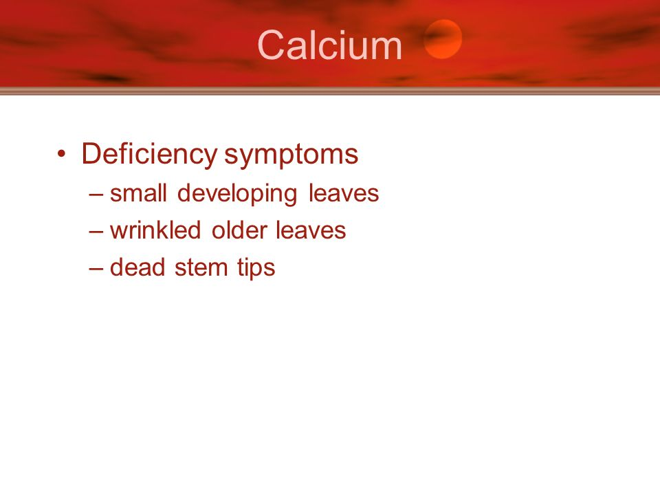 Calcium Deficiency symptoms small developing leaves