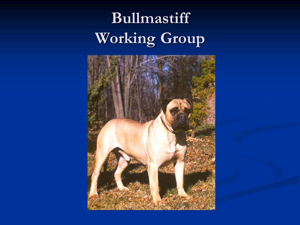 Bullmastiff Working Group