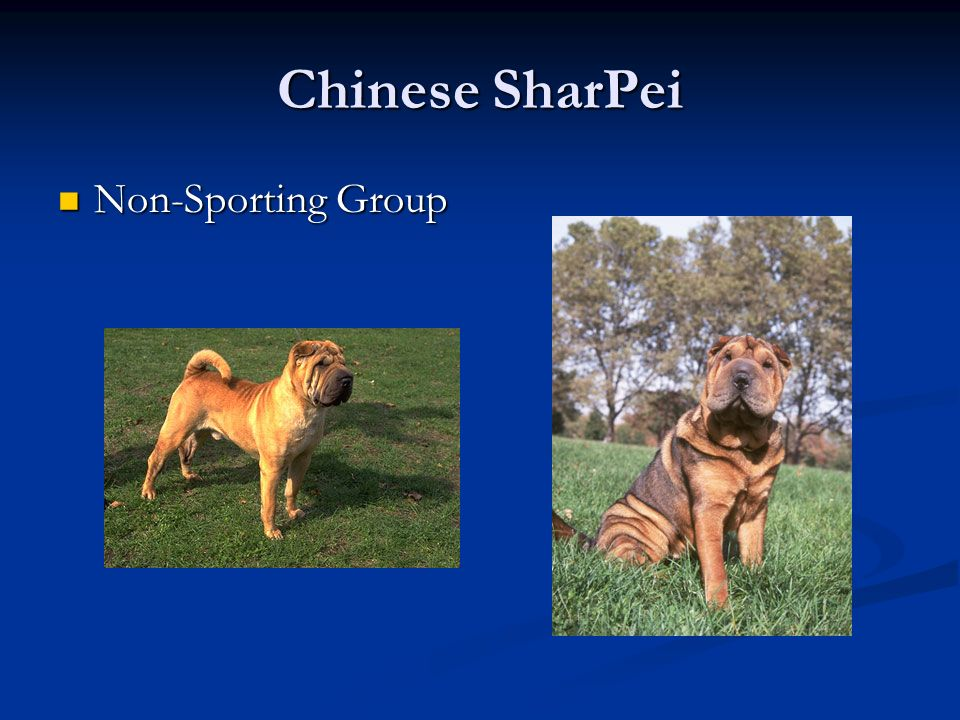 Chinese SharPei Non-Sporting Group