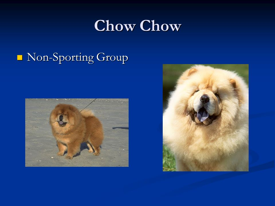 Chow Chow Non-Sporting Group