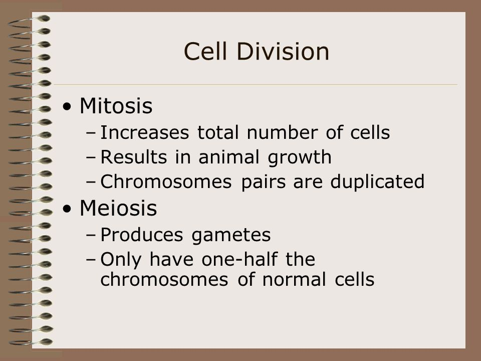 Cell Division Mitosis Meiosis Increases total number of cells
