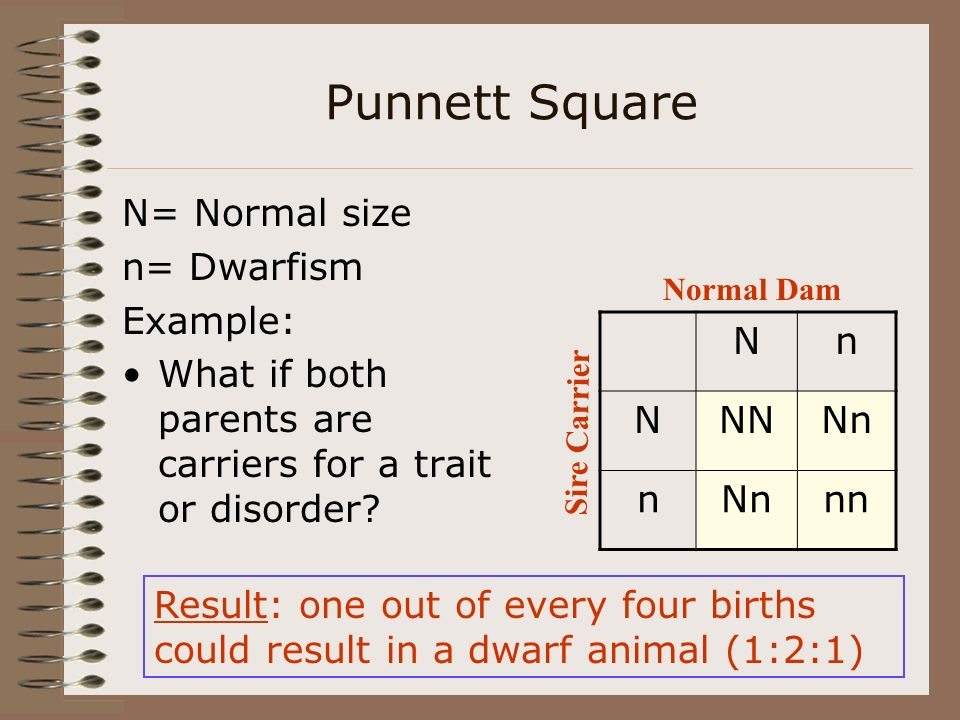 Punnett Square N= Normal size n= Dwarfism Example: