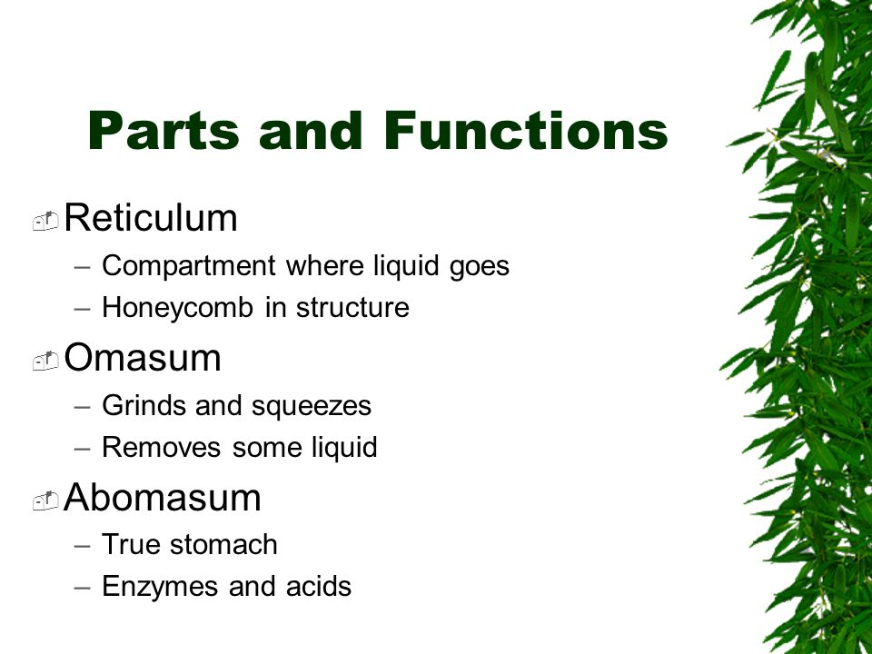 Parts and Functions Reticulum Omasum Abomasum