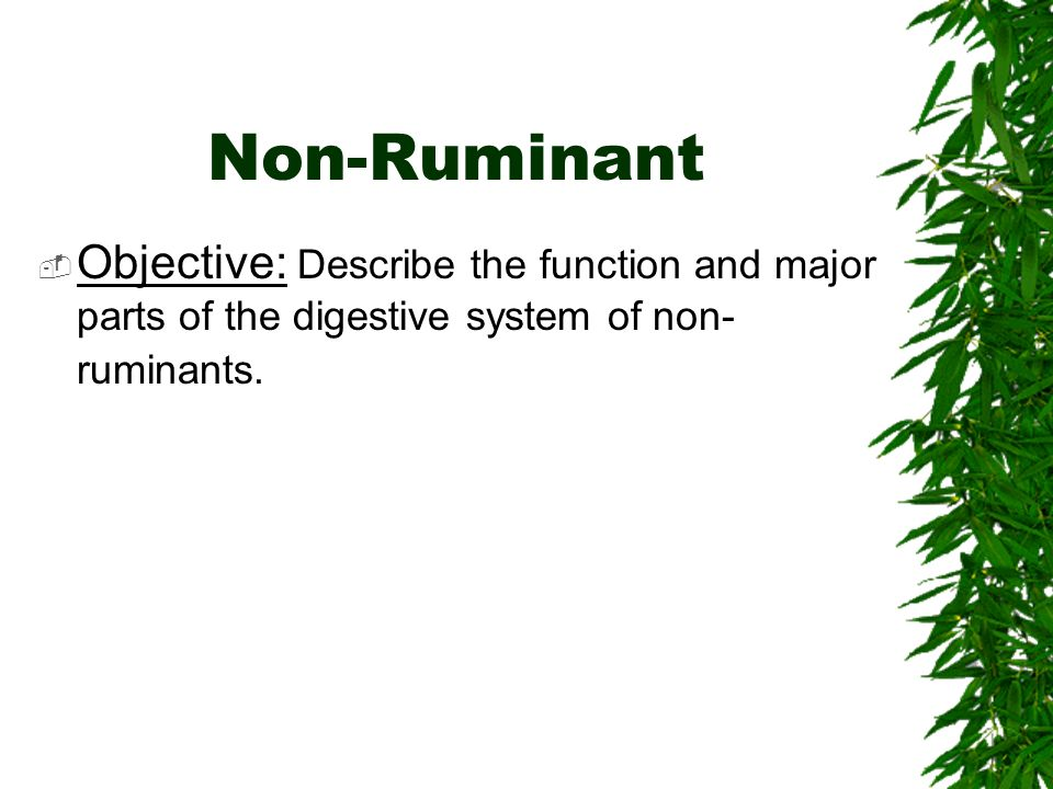 Non-Ruminant Objective: Describe the function and major parts of the digestive system of non-ruminants.