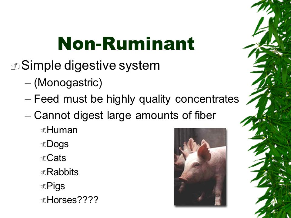 Non-Ruminant Simple digestive system (Monogastric)