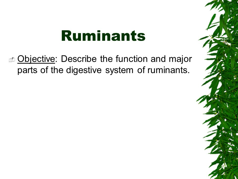 Ruminants Objective: Describe the function and major parts of the digestive system of ruminants.
