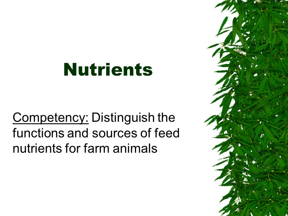 Nutrients Competency: Distinguish the functions and sources of feed nutrients for farm animals