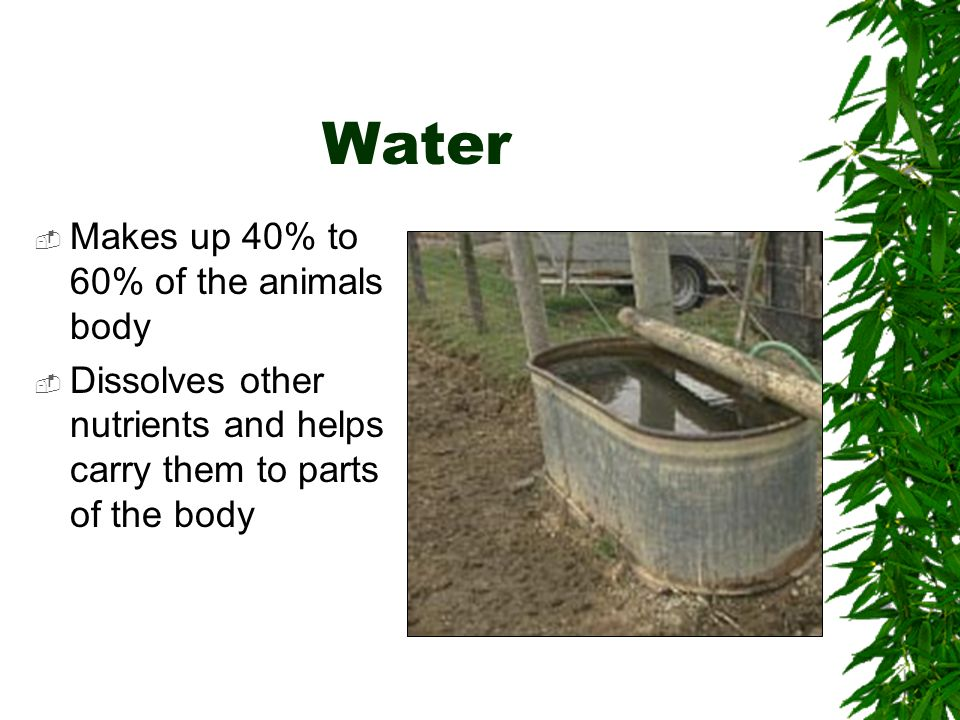 Water Makes up 40% to 60% of the animals body