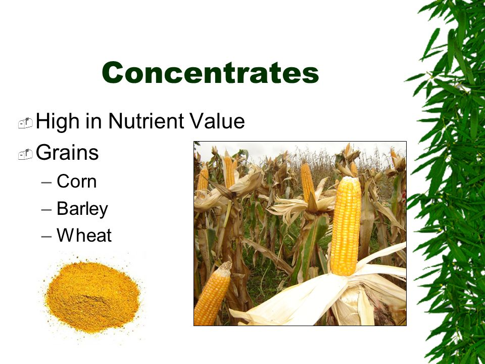 Concentrates High in Nutrient Value Grains Corn Barley Wheat