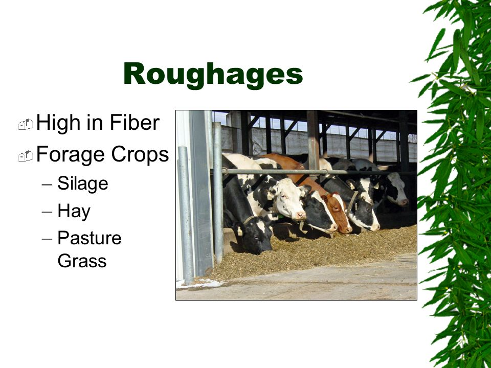 Roughages High in Fiber Forage Crops Silage Hay Pasture Grass