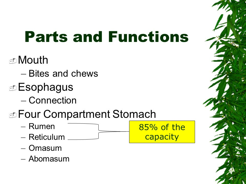 Parts and Functions Mouth Esophagus Four Compartment Stomach