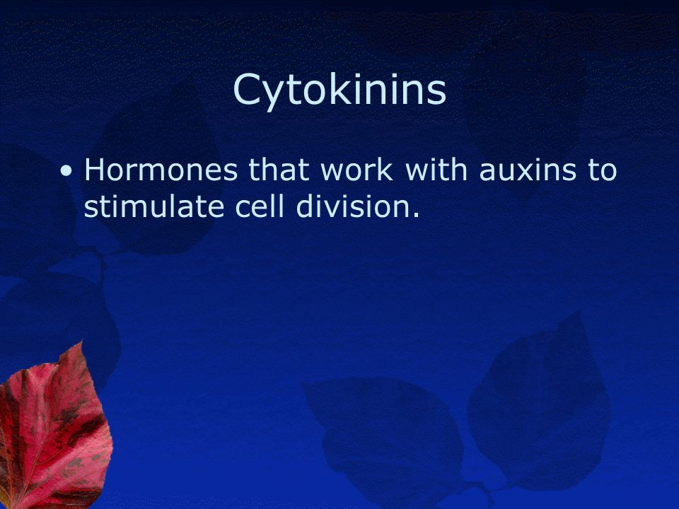 Cytokinins Hormones that work with auxins to stimulate cell division.