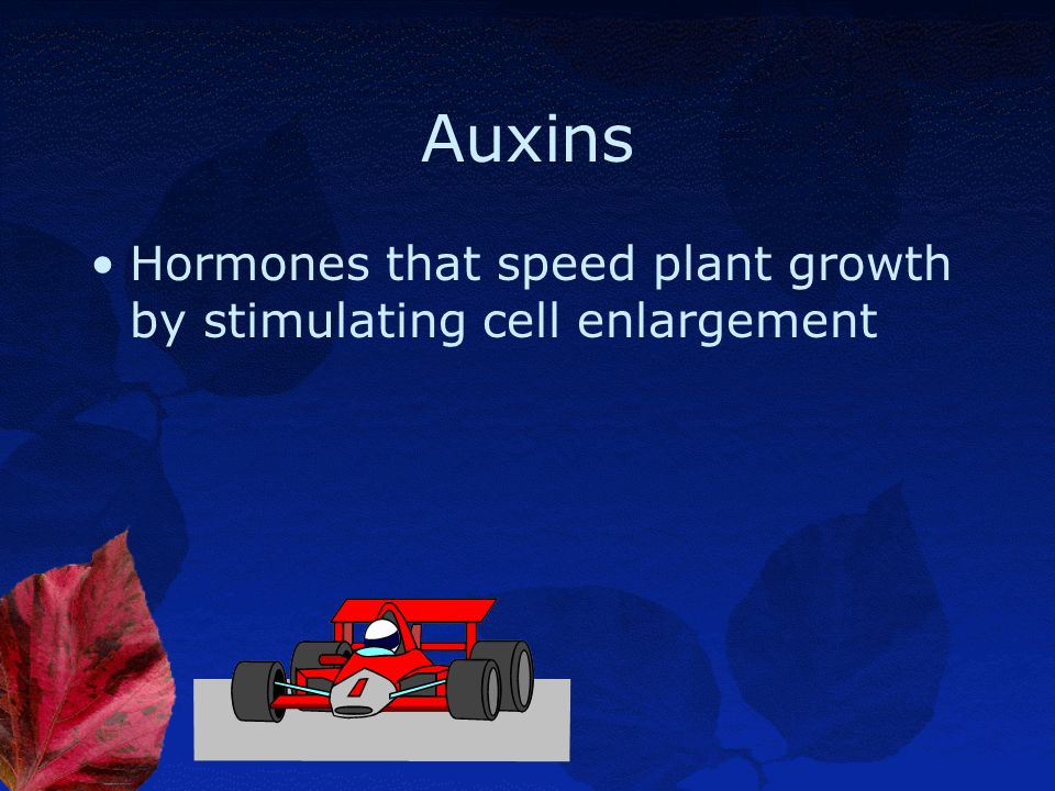 Auxins Hormones that speed plant growth by stimulating cell enlargement