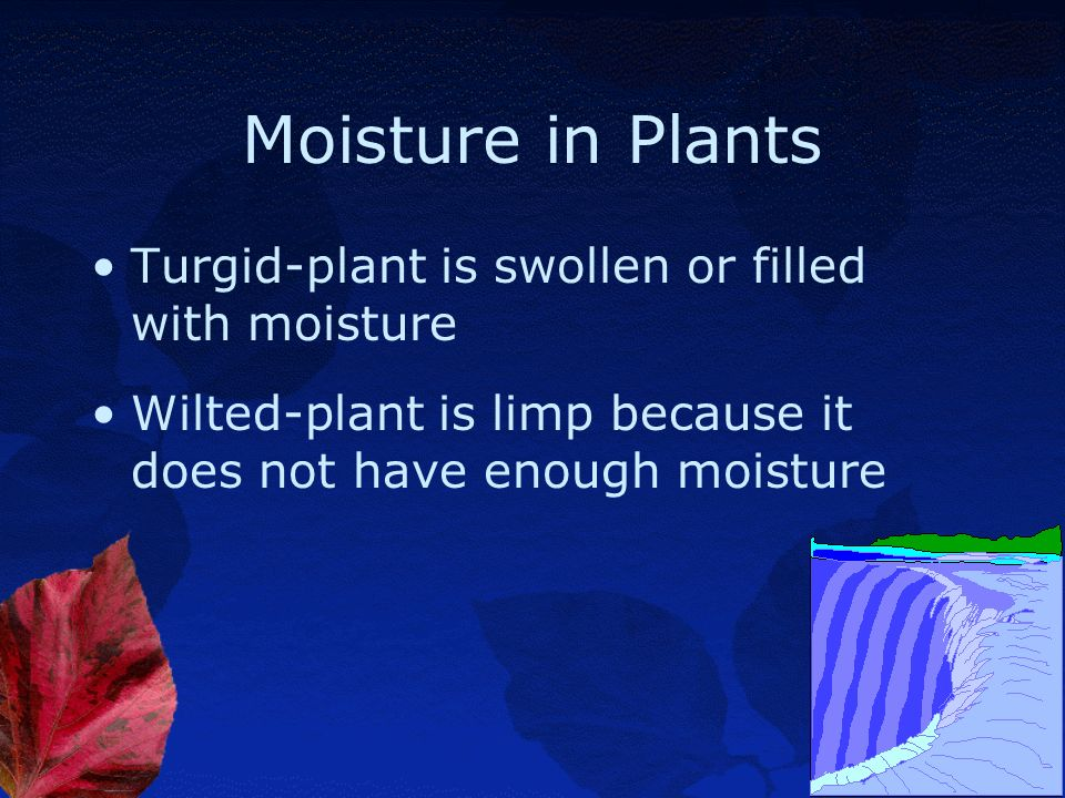 Moisture in Plants Turgid-plant is swollen or filled with moisture