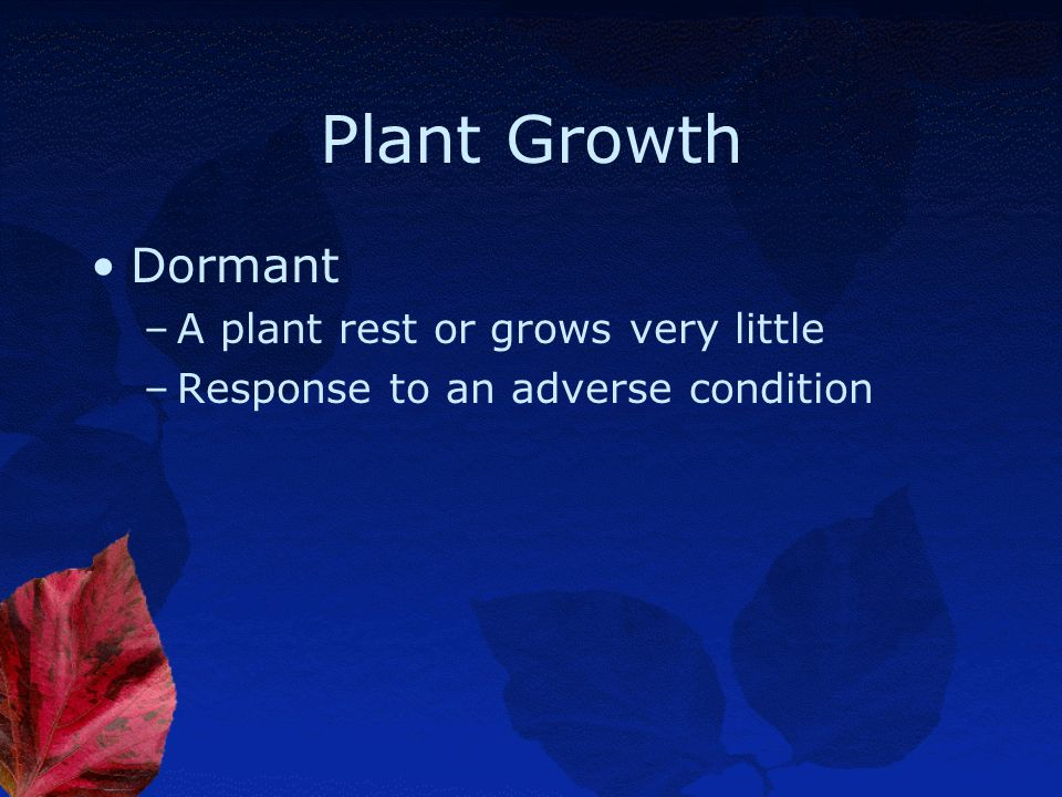 Plant Growth Dormant A plant rest or grows very little