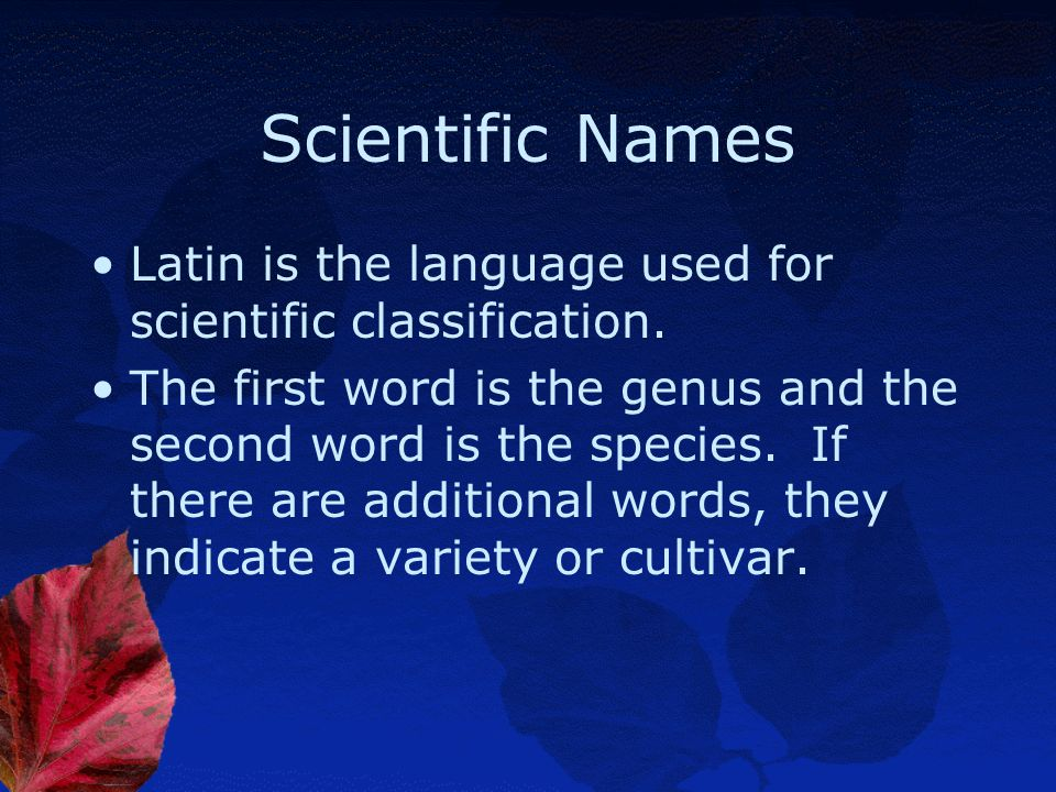 Scientific Names Latin is the language used for scientific classification.
