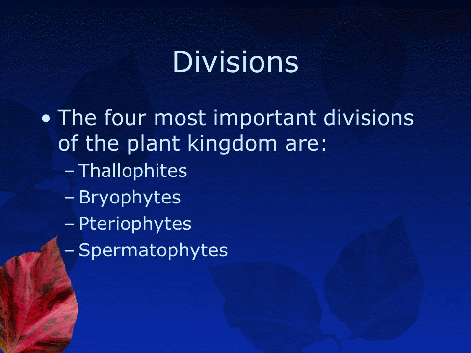 Divisions The four most important divisions of the plant kingdom are: