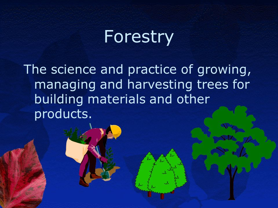 Forestry The science and practice of growing, managing and harvesting trees for building materials and other products.