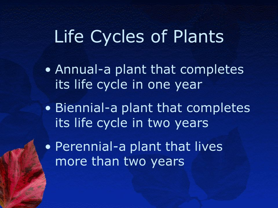 Life Cycles of Plants Annual-a plant that completes its life cycle in one year. Biennial-a plant that completes its life cycle in two years.