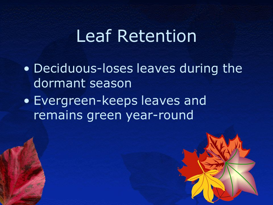 Leaf Retention Deciduous-loses leaves during the dormant season
