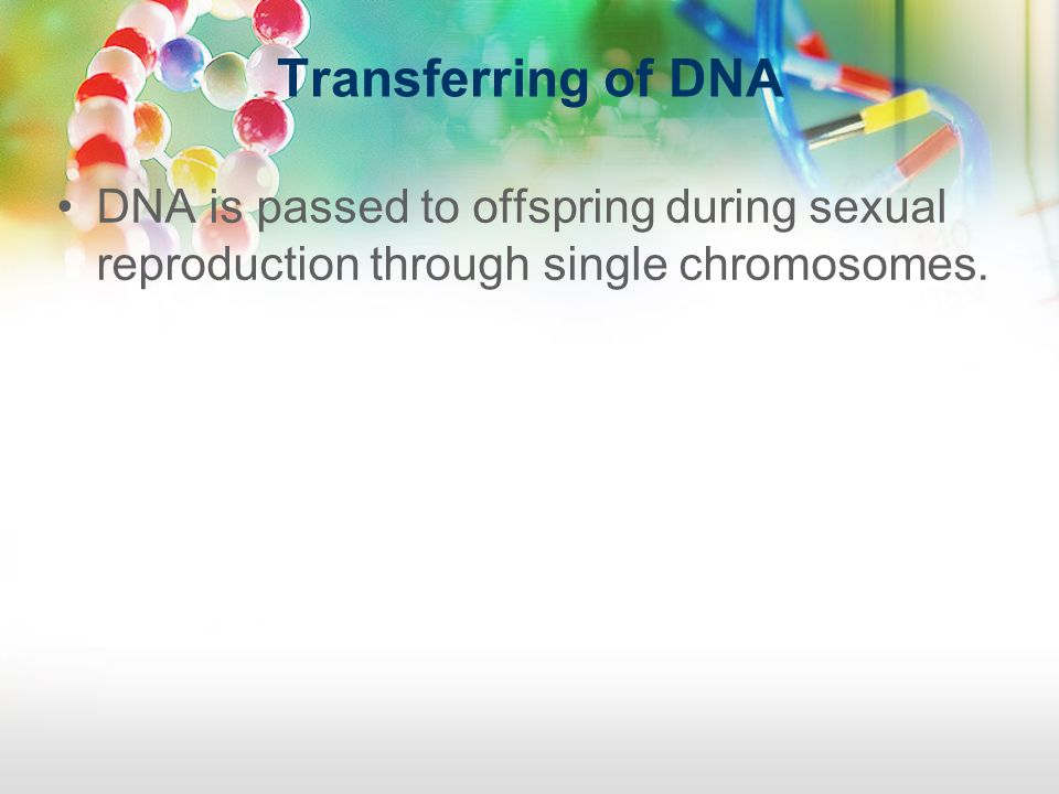 Transferring of DNA DNA is passed to offspring during sexual reproduction through single chromosomes.