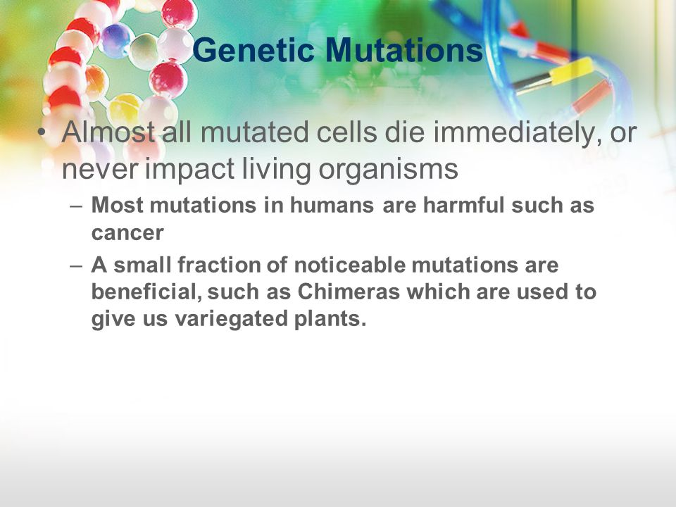 Genetic Mutations Almost all mutated cells die immediately, or never impact living organisms. Most mutations in humans are harmful such as cancer.
