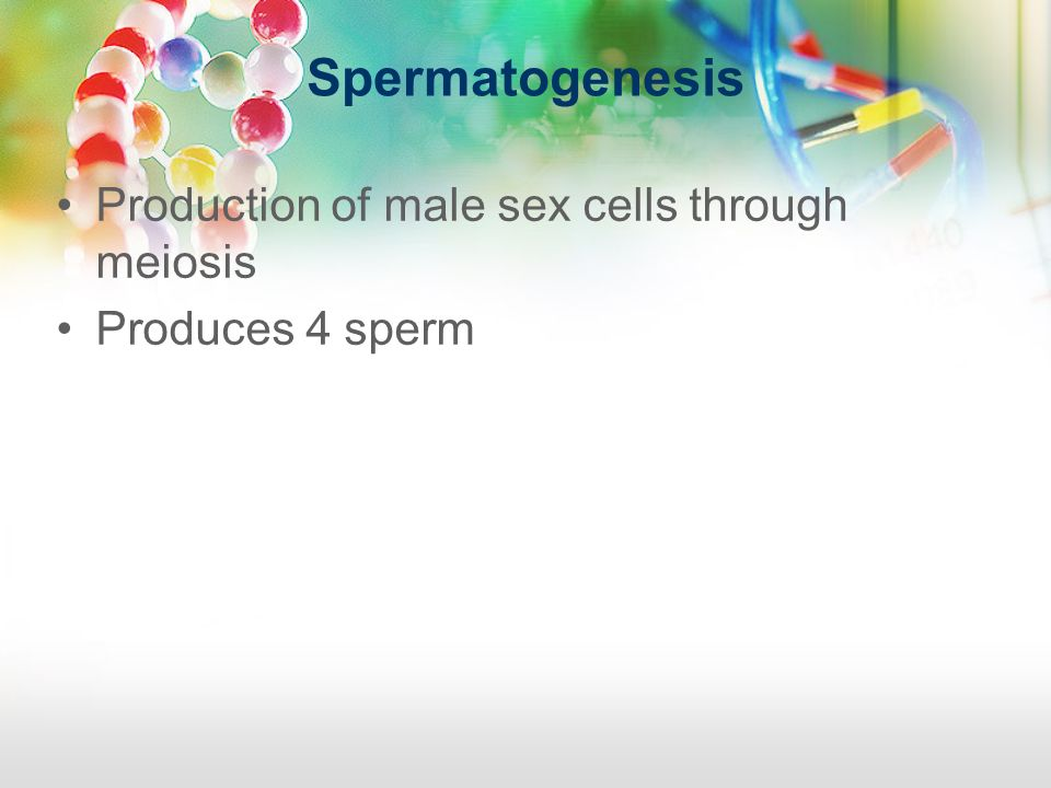 Spermatogenesis Production of male sex cells through meiosis