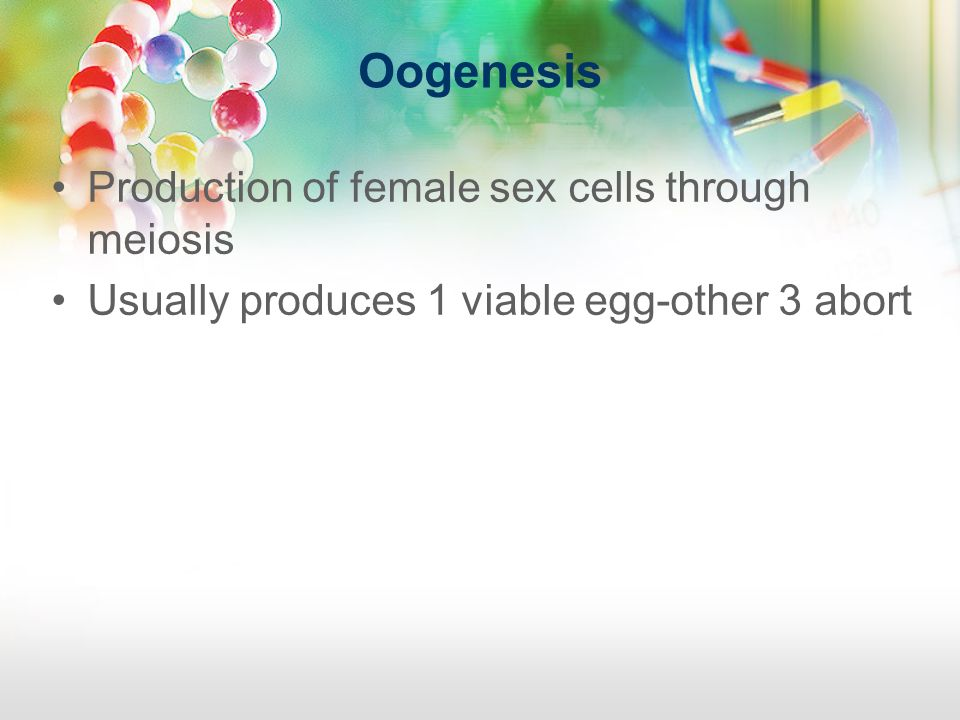Oogenesis Production of female sex cells through meiosis