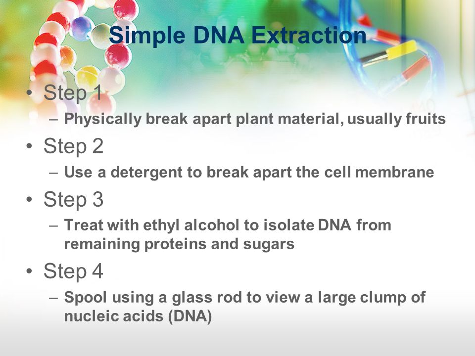 Simple DNA Extraction Step 1 Step 2 Step 3 Step 4