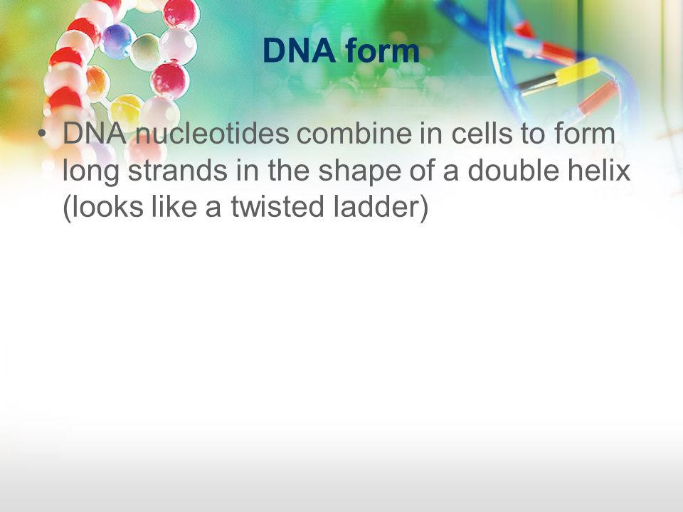 DNA form DNA nucleotides combine in cells to form long strands in the shape of a double helix (looks like a twisted ladder)
