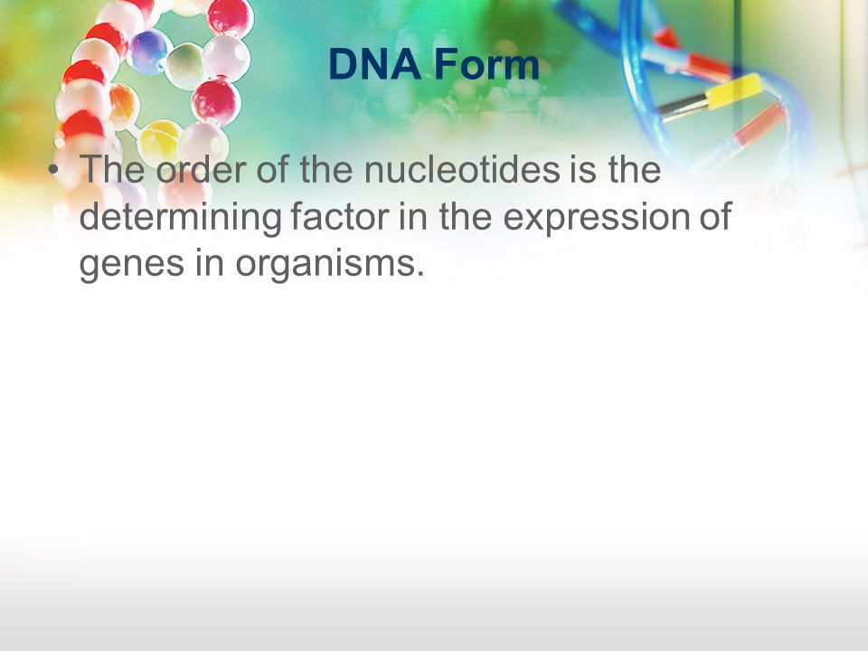 DNA Form The order of the nucleotides is the determining factor in the expression of genes in organisms.